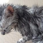 熱中症 入浴 猫
