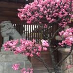 福岡から春の便り